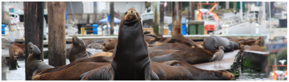 sq-sea-lion-header.jpg