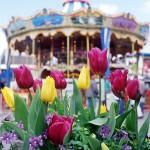 Tulipmania picture