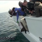 Marine Mammal Center releases Little Gobbler